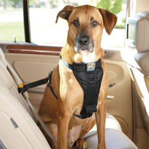 solvit-deluxe-car-safety-harness