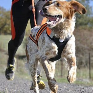 Harnesses, Leads & Muzzles