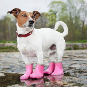Paw Wear & Protection