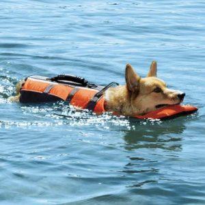 Flotation Devices & Life Jackets