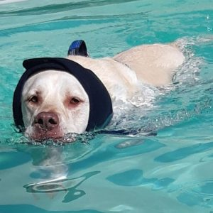 swim-snood