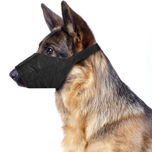 dog-muzzle
